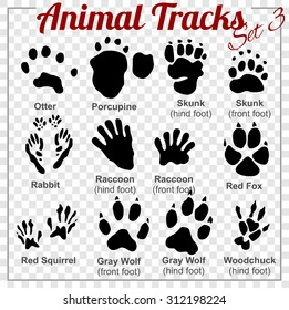Animals Tracks - vector set - stock illustration.