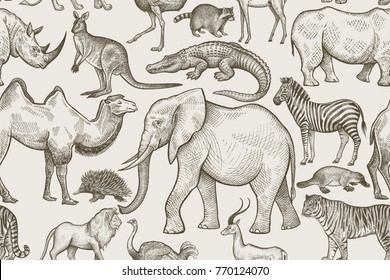 Animals of wild world seamless pattern. Elephant, tiger, lion, zebra, kangaroo, camel, rhinoceros, antelope, crocodile, raccoon, ostrich, echidna on white background. Vintage. Vector illustration art.