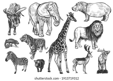 Animals of wildlife set. Lion, elephant, giraffe, tiger, hippo, zebra, chameleon, deer, mountain goat, wild pig and big-horned cow. Black and white illustration. Vector. Vintage. Realistic graphics.