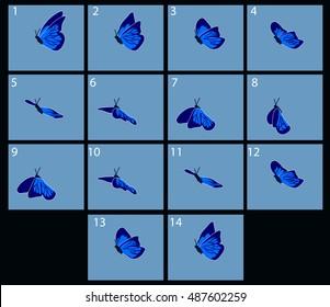Animation of flight blue butterfly. Cartoon explosion frames