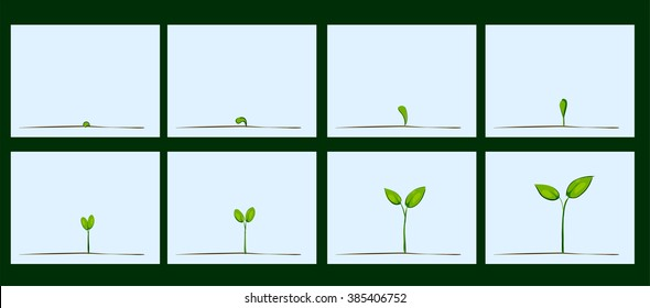 Animation of seed germination on soil, evolution concept