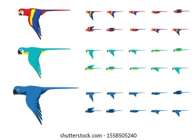 Animation Various Macaw Colors Flying Cute Cartoon Vector Illustration
