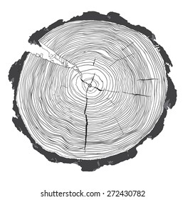 Annual tree growth rings with grayscale drawing of the cross-section of a tree trunk isolated on white. Vector illustration
