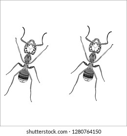 Ant enthnic vector