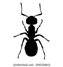 Ant, insect, wrecker, parasite (vector, silhouette, outline, black, white background)