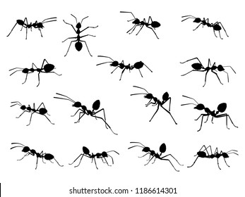 Ant silhouette vector. Insect in black and white concept