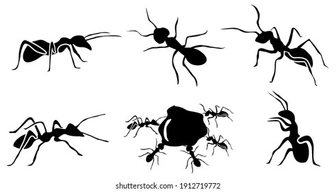 Ant Silhouette vector. symbol icons Ant illustration. black and white bakcground