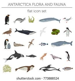 Antarctic, Antarctica flora and fauna flat elements. Animals, birds and sea life big set. Build your geography infographics collection. Vector illustration