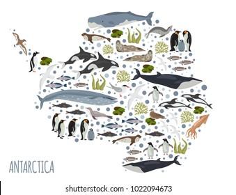 Antarctic, Antarctica,  flora and fauna map, flat elements. Animals, birds and sea life big set. Build your geography infographics collection. Vector illustration