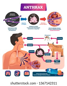 Anthrax vector illustration. Labeled medical infection disease cycle scheme. Bacterial illness used as biological warfare weapons. Diagram of spores exposure to oxygen produce toxins and cause death.