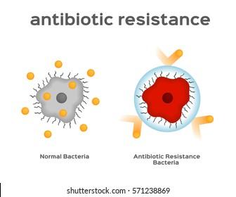 antibiotic resistance bacteria and virus vector