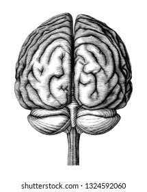 Antique illustration of human brain engraving style isolated on white background