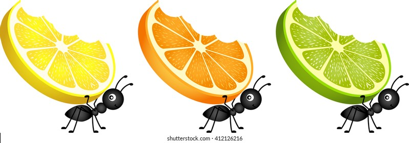 Ants carrying citrus fruit slices