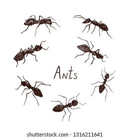 Ants collection drawing, vintage engraved illustration style, hand drawn doodle, sketch, vector with inscription