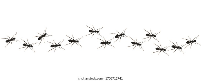 Ants path graphic icon. Black line of worker ants isolated on white background. Vector illustration