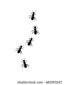 ants walking in line.concept of teamwork