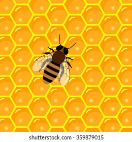 apiary products and beekeeping