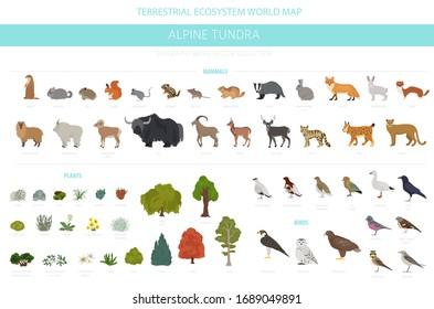Apine tundra biome, natural region infographic. Animals, birds and plants design set. Vector illustration