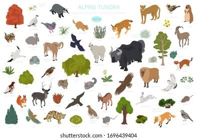Apine tundra biome, natural region isometric infographic. Terrestrial ecosystem world map. Animals, birds and plants design set. Vector illustration