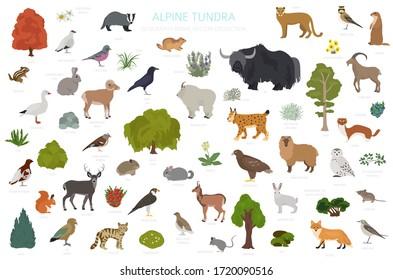 Apine tundra biome, natural region infographic. Terrestrial ecosystem world map. Animals, birds and plants design set. Vector illustration