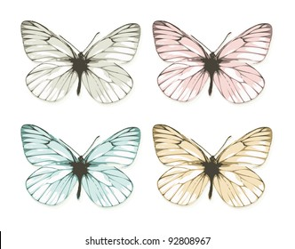 Aporia butterflies isolated on white background (vector)