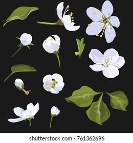 Apple Blossom Vector Clip Art Set Flower image