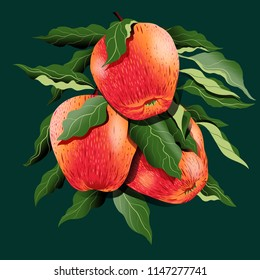 Apple branch hand drawing vintage illustration isolate on dark green background.