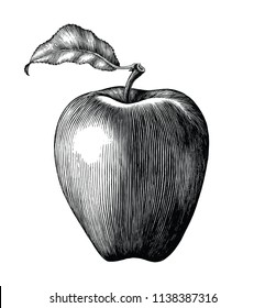 Apple fruit drawing vintage clip art isolated on white background