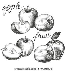 apple fruit set hand drawn vector illustration sketch