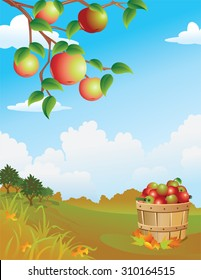 Apple Harvest Background