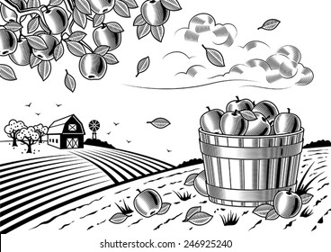 Apple harvest landscape black and white. Fully editable vector illustration with clipping mask.