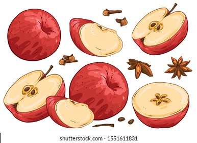 Apple illustration hand draw vector. Group of fruit cut apples, star anise, cloves and apple star. Isolated onwhite background. Winter spices for hot drink. Christmas Collection.