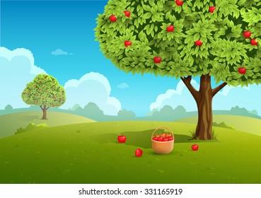 Apple orchard with basket of apples. Landscape background. Vector illustration