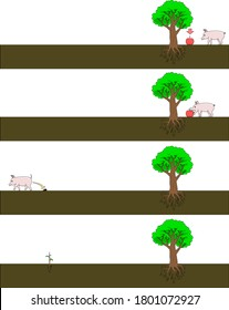 Apple seed dispersal by mammal