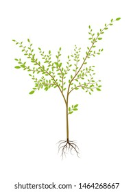 Apple seedling. Vector illustration, flat design style.