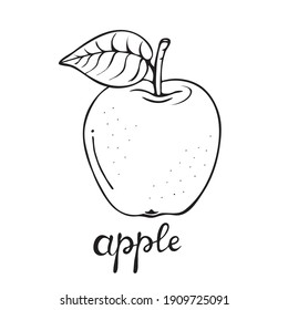 Apple sketch. Cartoon black and white outline. Drawn vector fruit illustration for greeting cards, posters, recipes, culinary design, children's coloring pages.Isolated on white background. Lettering
