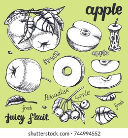 Apple sketch.Vector hand drawn vintage fruits . Sketch vector and lettering, vegetarian food illustration.Retro style. Slices,fruits.Organic background