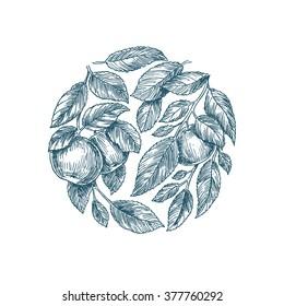 Apple tree background. Apple leaf engraved illustration. Vector illustration