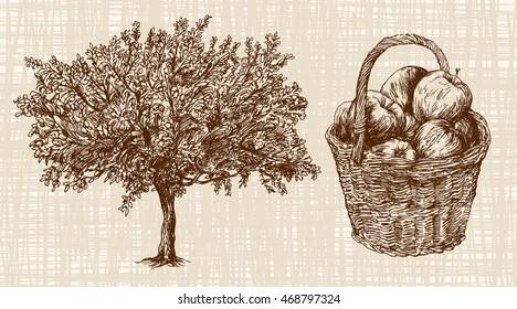 Apple tree, basket of apples.