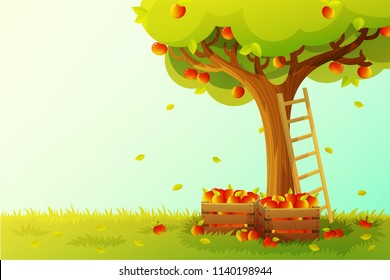 Apple tree harvest in orchard. Wooden ladder and crate full of red apples. Autumn season. Vector illustration.