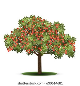 apple tree with red fruits on a white background