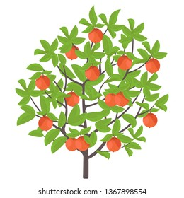 Apple tree. Vector illustration. Fruit tree plant. Flat vector color Illustration clipart. Ripe red apples on a tree.