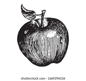 Apple, vector images. Vector graphics for labels, menus, packaging design, advertising, interior designs and food service signage