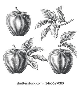 Apples and apple trees branch composition set. Hand drawn engraving style illustrations.