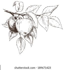 Apples background. Fruits sketch card