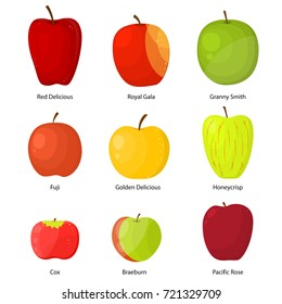 Apples Different Varieties with a Description Fruit Set Include of Fuji, Cox, Braeburn, Royal Gala and Honeycrisp . Vector illustration of Apple