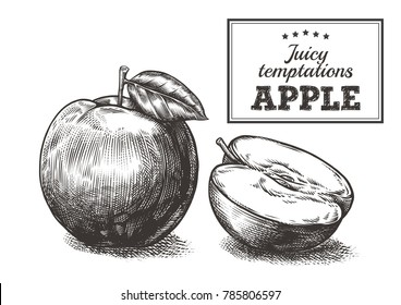 Apples engraving vector illustration on white background. Shadow on a separate layer. Multilayered