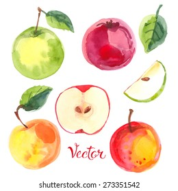Apples painted with watercolors on white paper. Red apple, green apple, leaf, half an vector apple