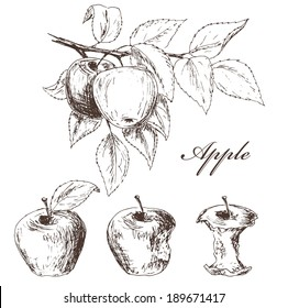 Apples set. Fruits sketch collection. Process from the whole apple to apple cores