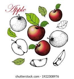 Apples, whole and halves, cut with leaves. Hand drawn illustration. Isolated on white background. For the design of packages, labels, cards.